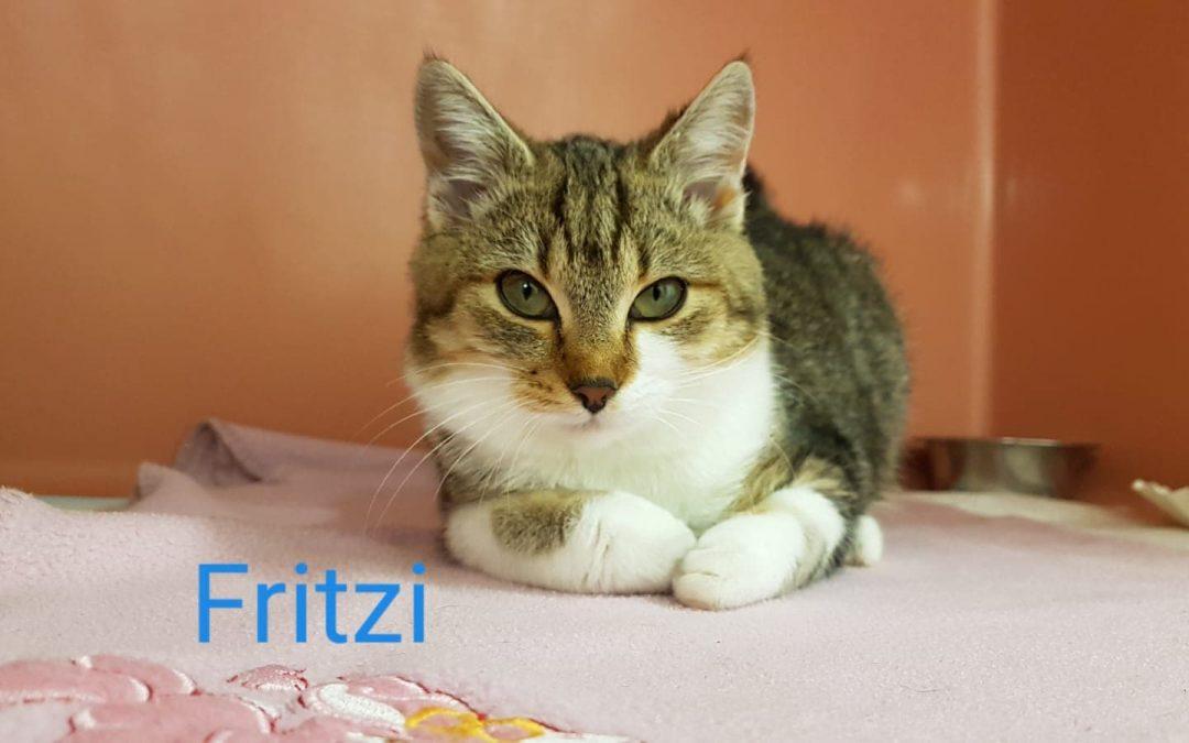 Fritzi – der junge Kater