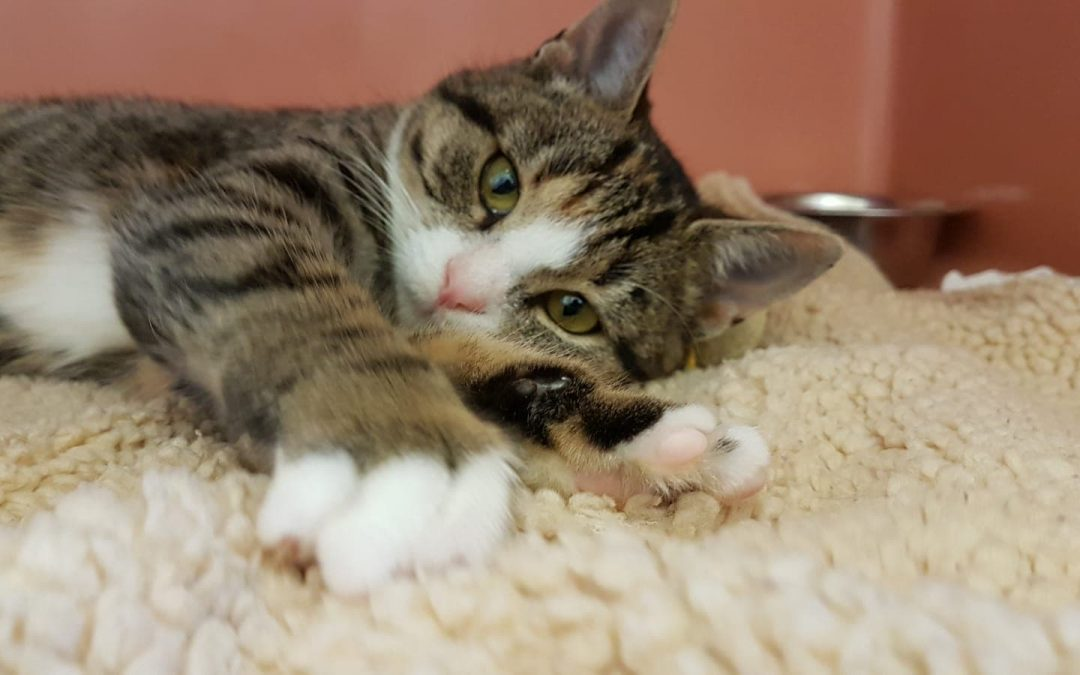 Katzenmädel Rene´
