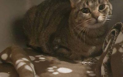 Elisa – tolle Katzenmama sucht nun auch ein Zuhause