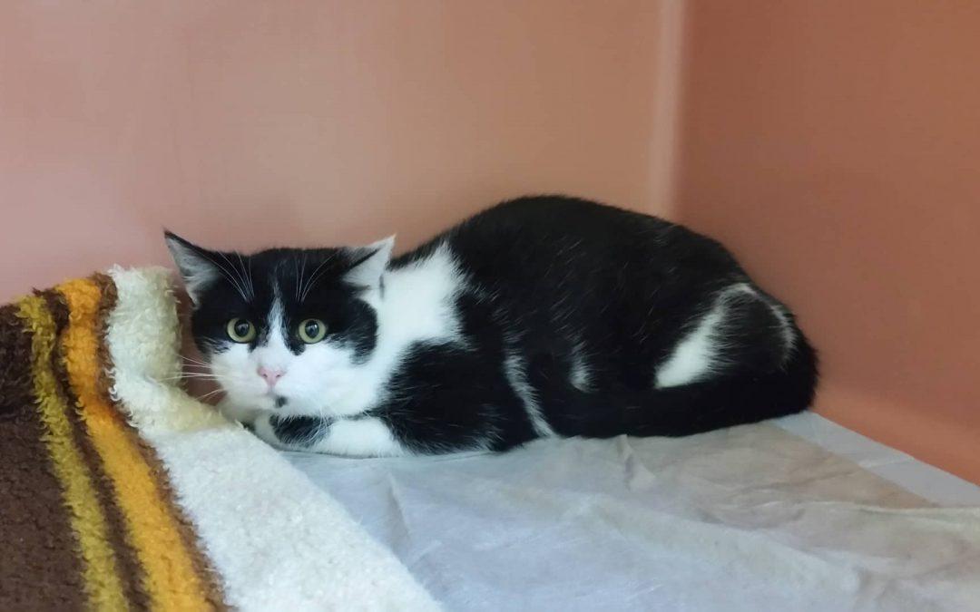 Katzenmädel Amelie