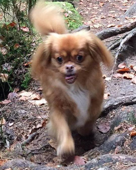 kleines Hundemädel Angel sucht neue Familie