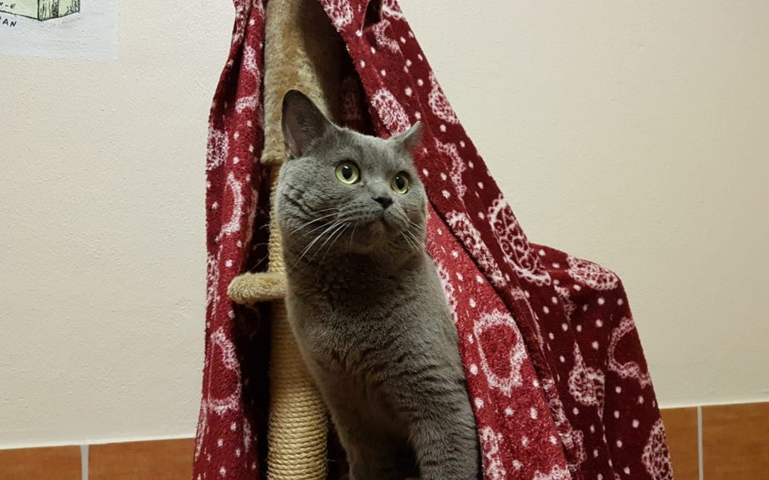 Walter – ein Fall für echte Katzenflüsterer