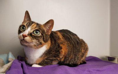 Katzenlady Lucy