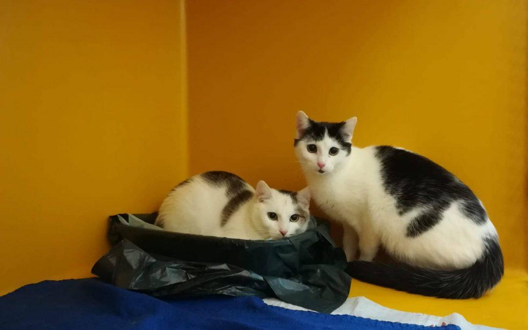 Kinia und Kinion