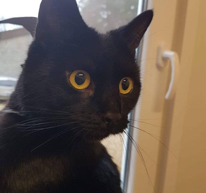 Motzi will eine Freigänger Katze sein :+)
