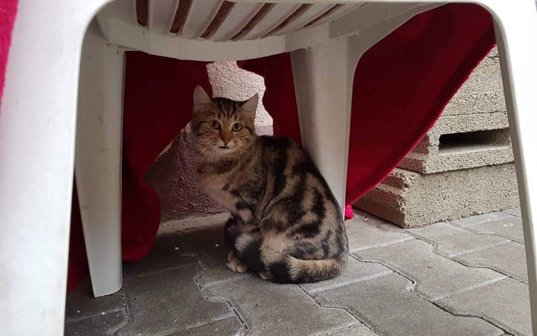 Katzenmädel Bibi