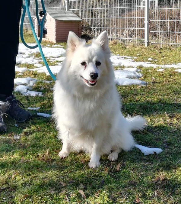 Hundemädel Wuschel – 'Spitz pass' auf' :+)