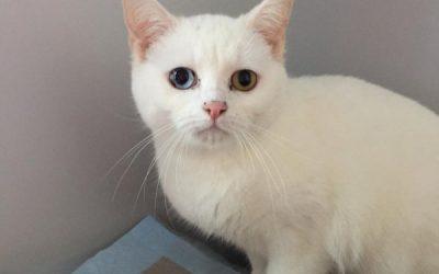 Aisha – ein 'aufdringliches' Katzenmädel :+)