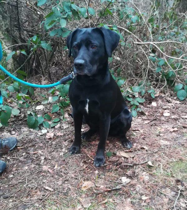 Mia – ein tolles Hundemädel