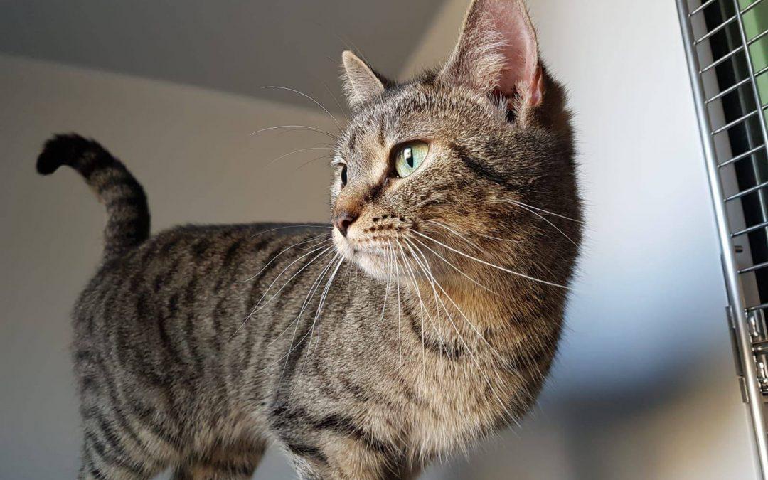 Katzenmädel Kathi – schau' mir in die grünen Augen