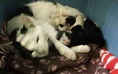Katzenmama Jessie plus 6 Babies :+)