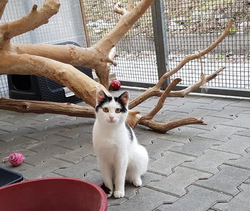 Katzenmädel Susi
