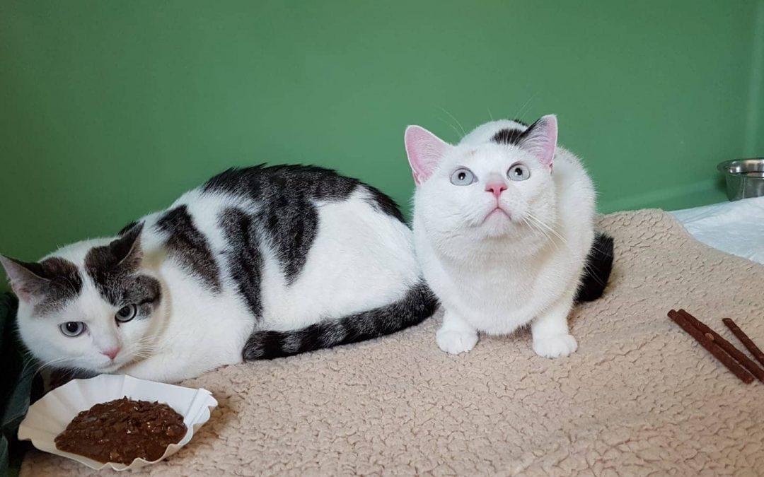Stella und Lumpi – Geschwisterpaar sucht neue Familie