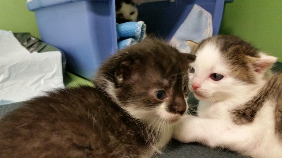 Katzenmama 'Odette' und ihre zwei Babies