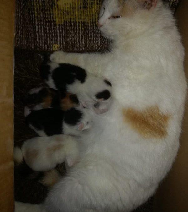 Katzenmama Mila und ihre 4 Babies