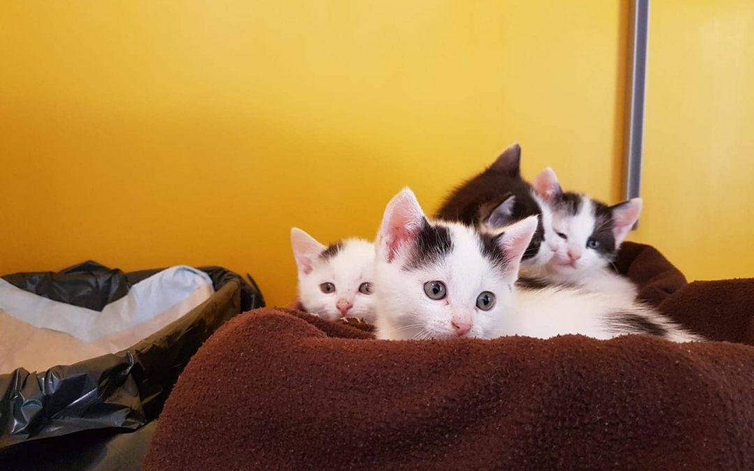 Quartett in schwarz-weiß u kleines Katzenmädel