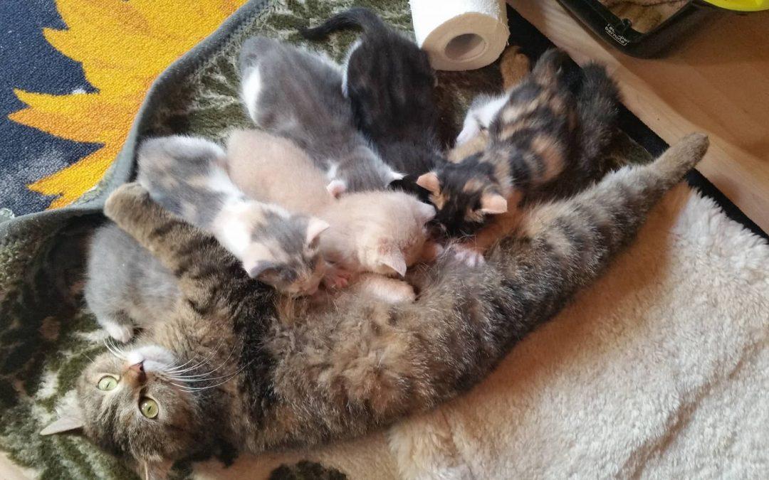 6 herzige Katzenkinder und Mama Olivia