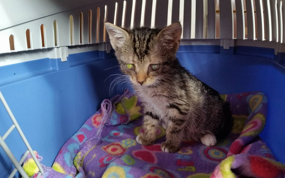 Katzenkind in Freihung gefunden