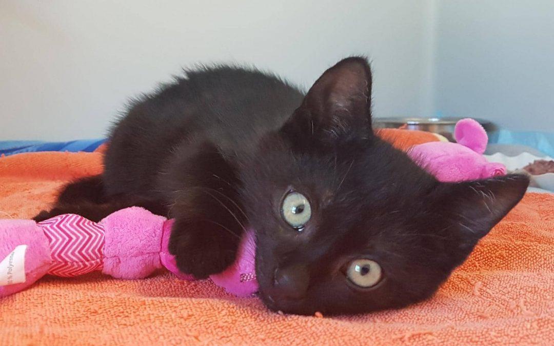 die schwarze Vierer Bande – Katzenkinder suchen liebevolles Zuhause