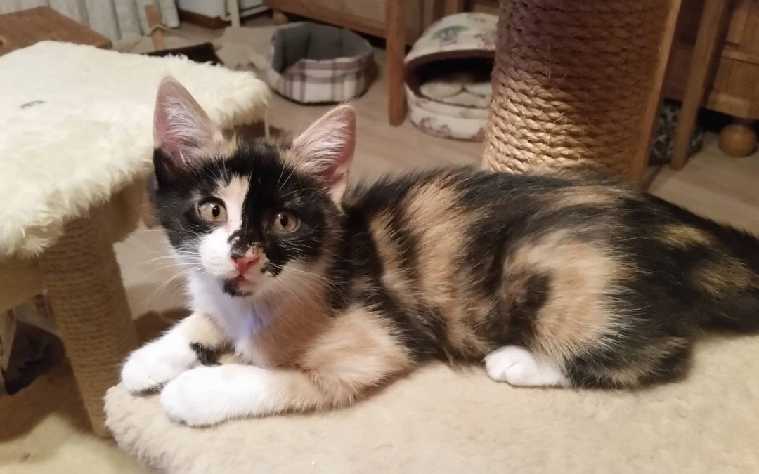 Kessy und Felix – zwei junge Katzen