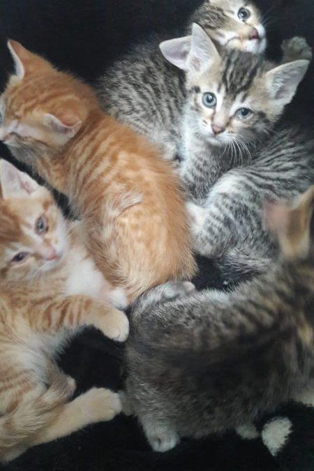kleine Tiger und kleine 'rote Bengel' suchen liebevolle Familien