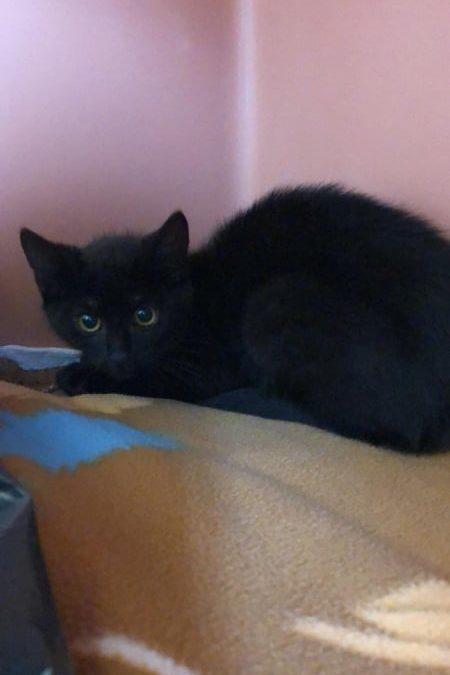 Duo in schwarz – die zwei 'black Kitten' :+)