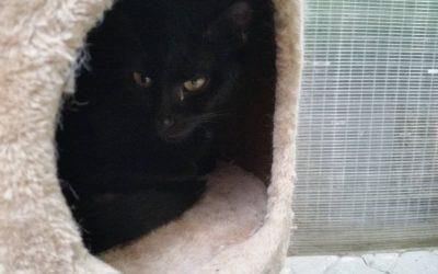 Penny – das 'besondere' Katzenmädel
