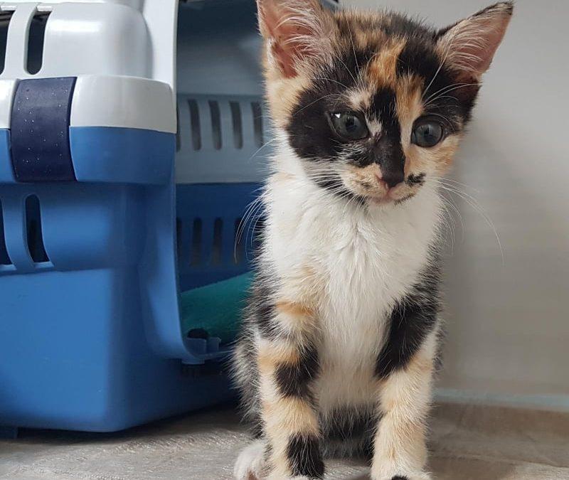 kleine Trini -süßes Katzenmädel