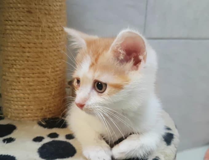 kleiner Katzenbub Nico – ein Sonnenschein