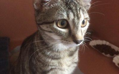 Ronja – liebes Tigermädel