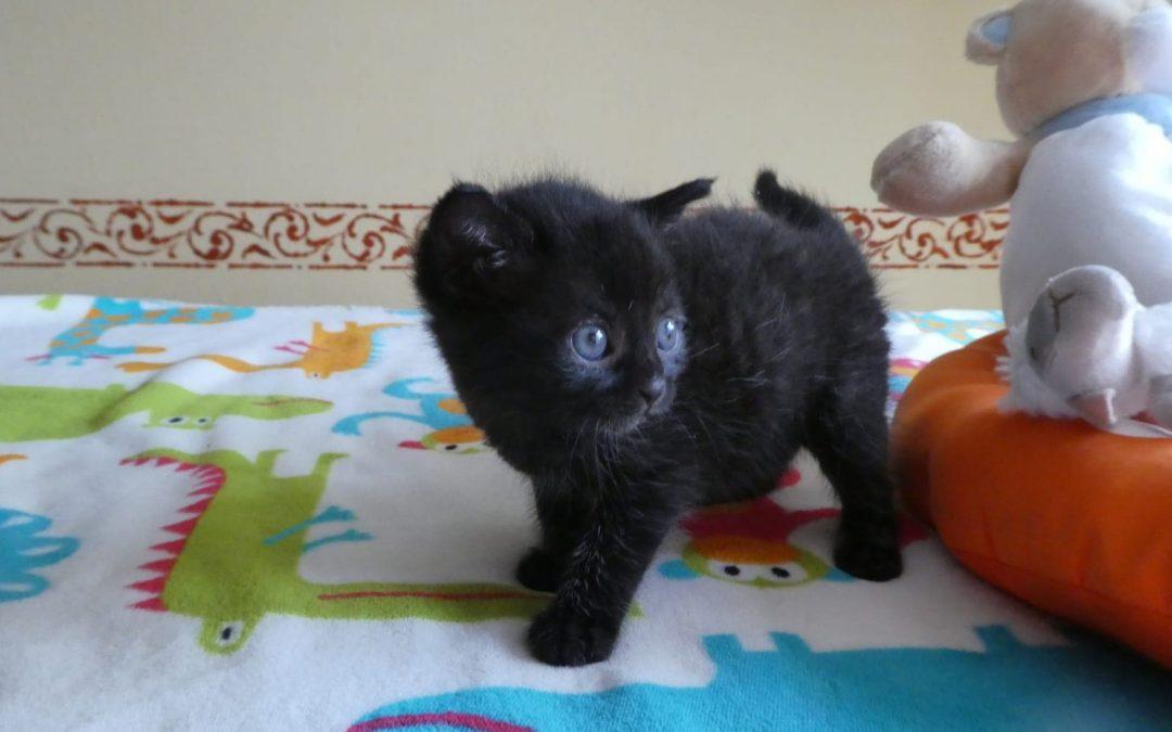 Katzenmädel Finja