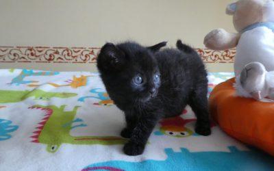 Katzenmädel Finja – wird nur zusammen mit Baby Fritzi vermittelt