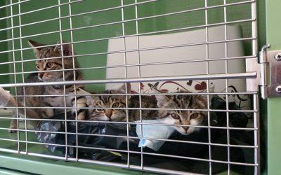 eins, zwei, drei Tigerkinder suchen liebe Familien