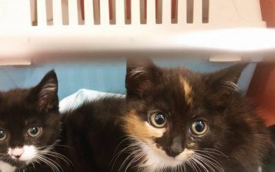 Mimi und Momo – zwei 'Babies' suchen liebe Familie