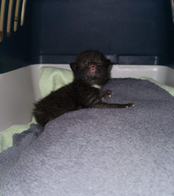 Katzenbaby gefunden in Vilseck / Nähe Schwimmbad