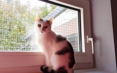 Cecilia – eine wunderschöne Katze und eine tolle Mama