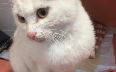 Jody – hübsches kleines Katzenmädel