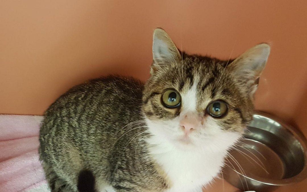 'Eule' – ein hübsches Katzenmädel