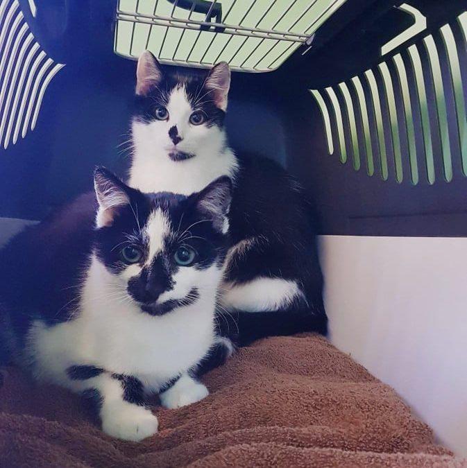 Anette und Mateo – junges Geschwister Paar