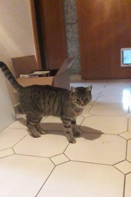 junges Katzenmädel Kathi – meine Dosenöffner möchte ich nur für MICH !