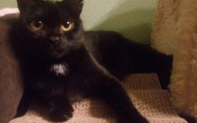 Katzenlady Wibke, eine ganz liebe Fellnase