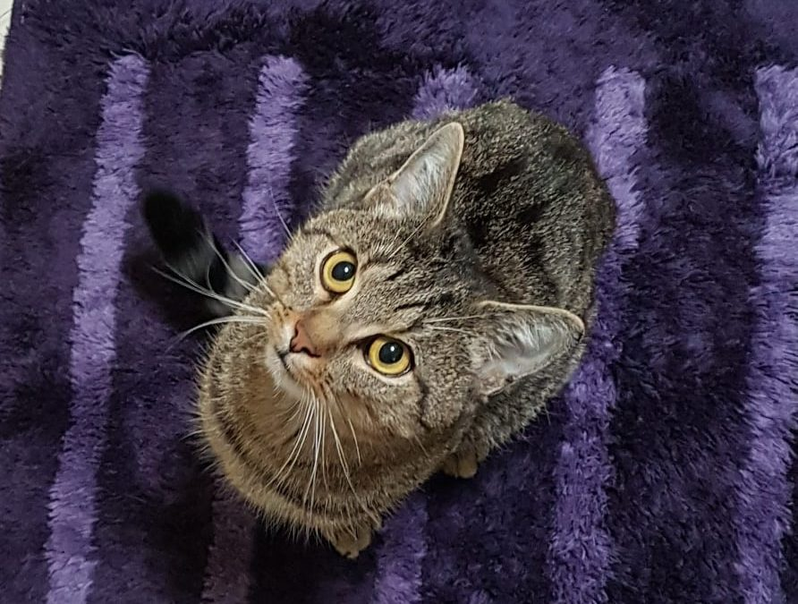 Chico – lieber Kater