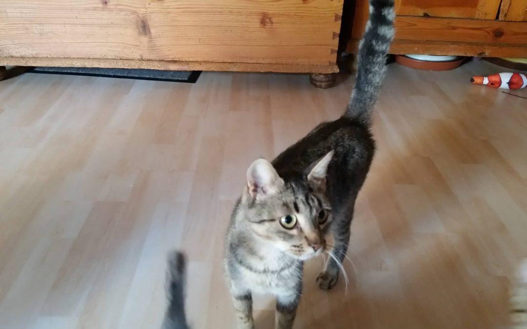 Katzenlady Thea