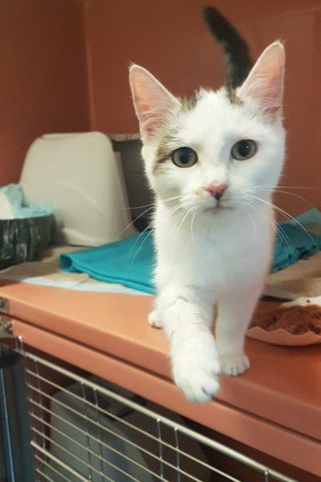 Katzenmädel Hanni