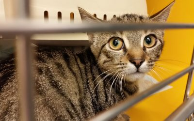 Kaya – ein junges Katzenmädel sucht liebevolles Zuhause