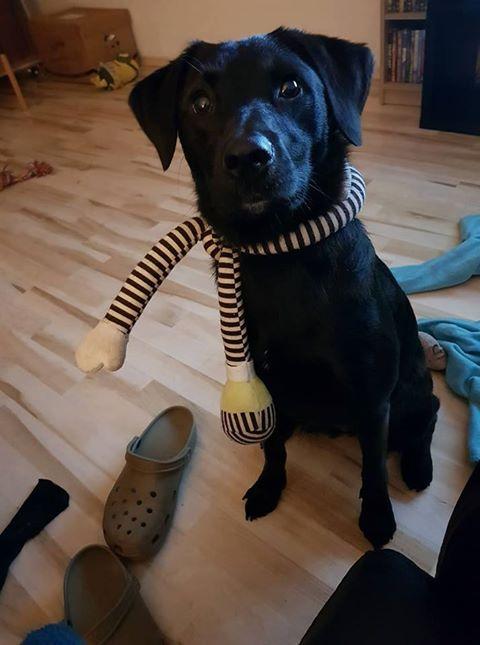 Amy und Shelly – zwei liebe Hundemädels suchen zusammen ein neues Zuhause