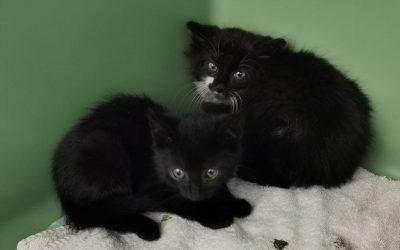 Lacky und Lue – zwei Katzenbuben suchen liebe Familie