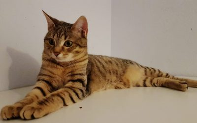 Nele – wunderschönes Tigerle (beste Freundin von Eleanor)