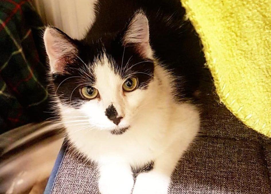 Anette – junges Katzenmädel