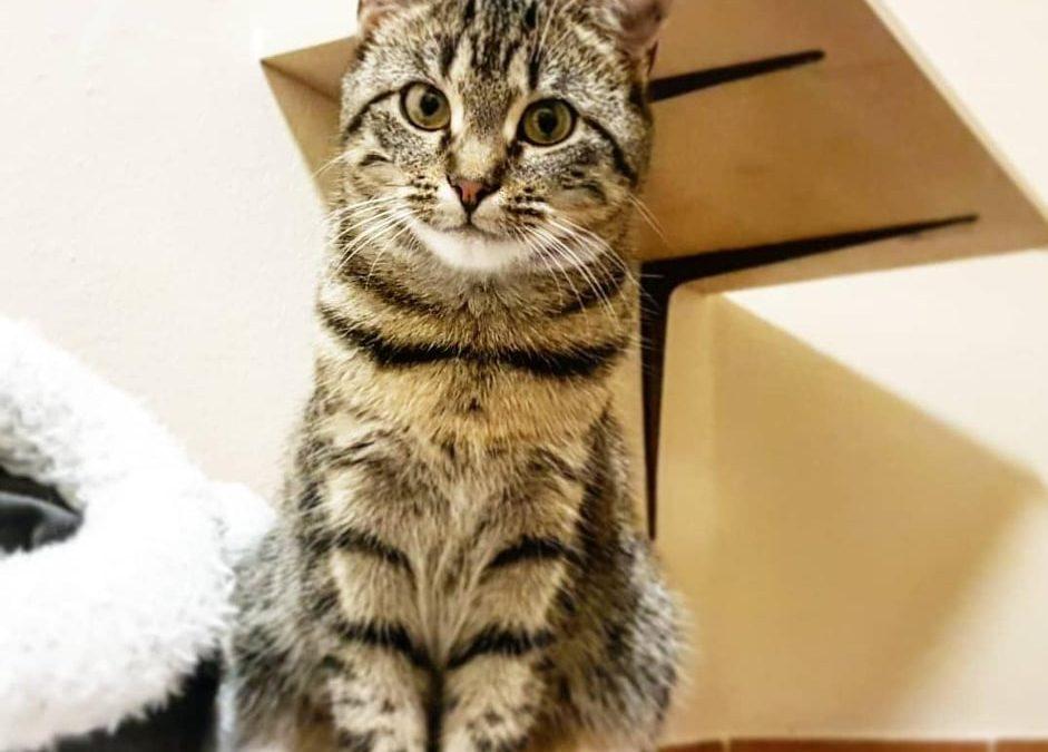 Kaya – ein junges Katzenmädel